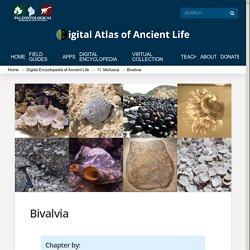 Digital Atlas of Ancient Life