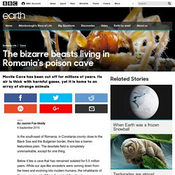 Earth - The bizarre beasts living in Romania's poison cave