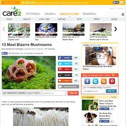 13 Most Bizarre Mushrooms