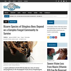 Bizarre Species of Stingless Bees Depend on a Complex Fungal Community to Survive