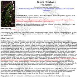 Black Henbane