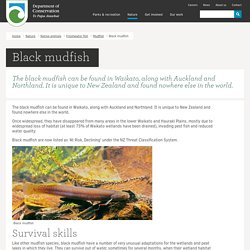 Black mudfish: Mudfish