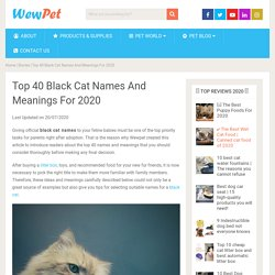 Top 40 Black Cat Names And Meanings For 2020 - WewPet