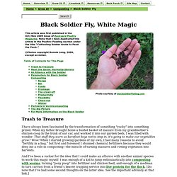 Black Soldier Fly, White Magic