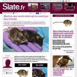 Black-6, une souris noire qui ne court pas dans l'herbe