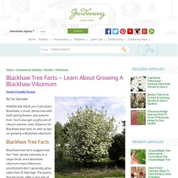 What Is A Blackhaw Viburnum Tree: Blackhaw Tree Care In The Landscape