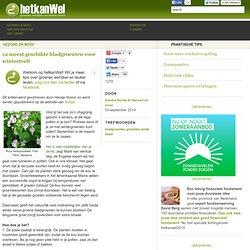 12 meest geschikte bladgroenten voor winterteelt