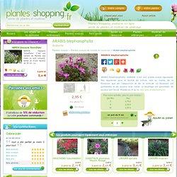 ARABIS blepharophylla - Plantes vivaces - Plantes Shopping, jardinerie en ligne