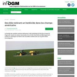 Des blés tolérant un herbicide dans les champs