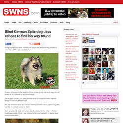 Blind German Spitz dog uses echoes to find his way round