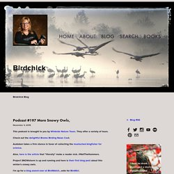 Blog — Birdchick