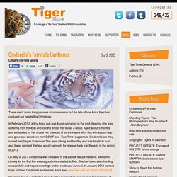 Blog Detail - TigerTime
