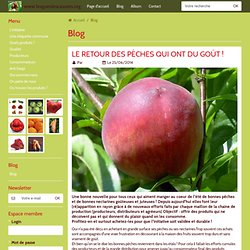 Blog - www.lesgueulescassees.org