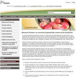 OMAFRA 01/01/13 Blossom Protect: un nouveau biopesticide contre le feu bactérien