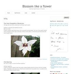 Blossom like a flower: VITAL