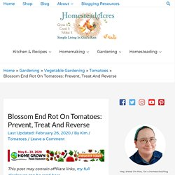 Blossom End Rot On Tomatoes: Prevent, Treat And Reverse - Homestead Acres