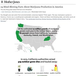 24 Mind-Blowing Facts About Marijuana Production in America