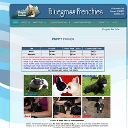 BlueGrass Frenchies of Richmond, KY