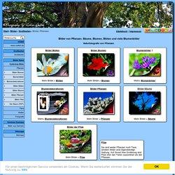 Bilder von Pflanzen. Bäume und Blumen, Blüten & viele Blumenbilder.