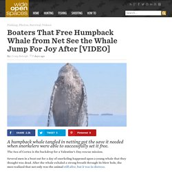Boaters That Free Humpback Whale from Net See the Whale Jump For Joy After [VIDEO] - Wide Open Spaces