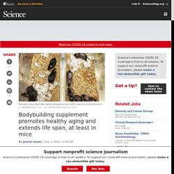 Bodybuilding supplement promotes healthy aging and extends life span, at least in mice
