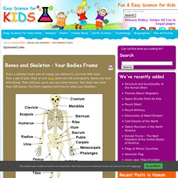Bone and Skeleton Fun Facts for Kids