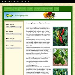 Bonnie Plants Canada - Growing Peppers