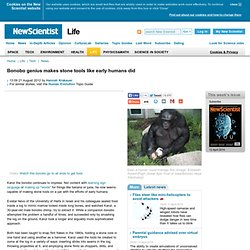 Bonobo genius makes stone tools like early humans did - life - 21 August 2012