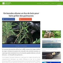 Un bonobo allume un feu de bois pour faire griller des guimauves