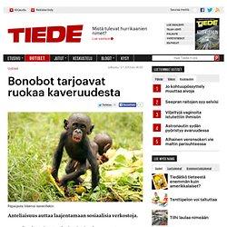 Bonobot tarjoavat ruokaa kaveruudesta