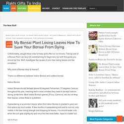 My Bonsai Plant Losing Leaves How To Save Your Bonsai From Dying