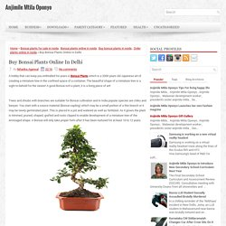 Buy Bonsai Plants Online In Delhi ~ Anjimile Mtila Oponyo