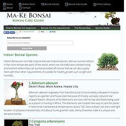 Espècies de Bonsai