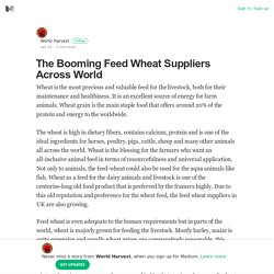 The Booming Feed Wheat Suppliers Across World