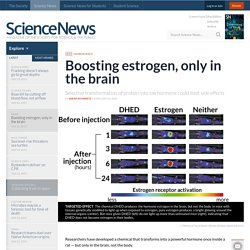 Boosting estrogen, only in the brain