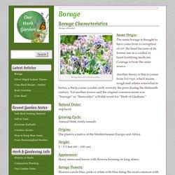 Borage - Our Herb Garden
