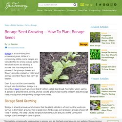 Borage Seed Propagation: Tips On Growing Borage From Seeds