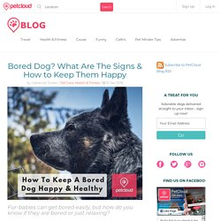 Bored Dog? What Are The Signs & How to Keep Them Happy