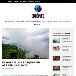El rol de los bosques en atraer la lluvia – Revista Endémico