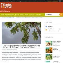 Le Boswellia serrata : l'anti-inflammatoire naturel de la médecine ay