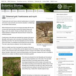 Botanical gold: frankincense and myrrh – Botanics Stories