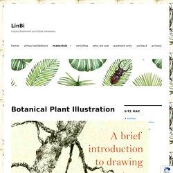Botanical Plant Illustration – LinBi
