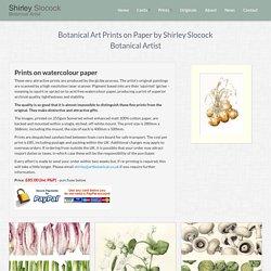Botanical Art Prints on Paper