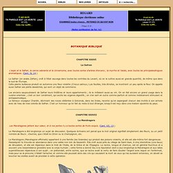 BOTANIQUE BIBLIQUE - 09