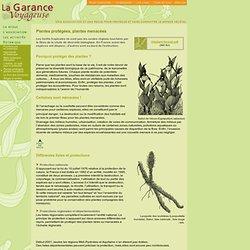 """Botanique - dépliant """"Plantes protégées, plantes menacées"""""""