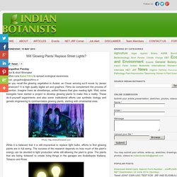 Indian Botanists: Will 'Glowing Plants' Replace Street Lights?