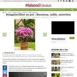 Bougainvillier en pot : floraison, taille, entretien