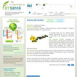 Bouillon blanc - 01sante