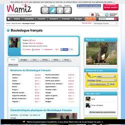 Bouledogue français : chien et chiot.