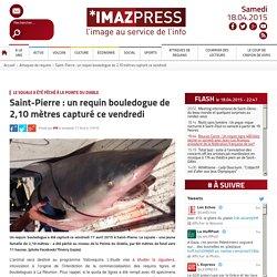 Le squale a été pêché à la Pointe du Diable : Saint-Pierre : un requin bouledogue de 2,10 mètres capturé ce vendredi
